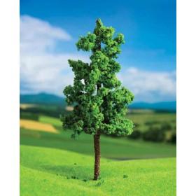 Dişbudak Ağacı 3 cm 5 li