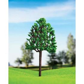 Kavak Ağacı 15 cm 1 li