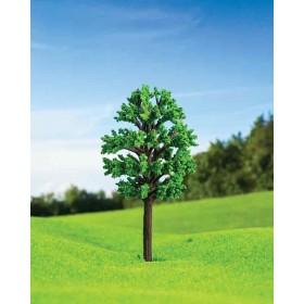 Zelkova Ağacı